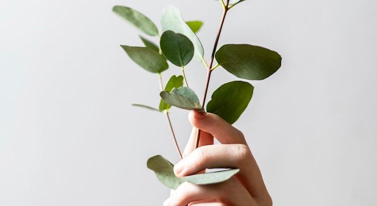 Familie ist wie ein Baum. Die Zweige mögen in unterschiedliche Richtungen wachsen, doch die Wurzeln halten alles zusammen. - Unbekannt