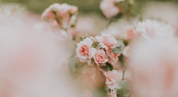 Geduld ist das Schwerste und das Einzige, was zu lernen sich lohnt. Alle Natur, alles Wachstum, aller Friede, alles Gedeihen und Schöne in der Welt beruht auf Geduld, braucht Zeit, braucht Stille, braucht Vertrauen. - Hermann Hesse