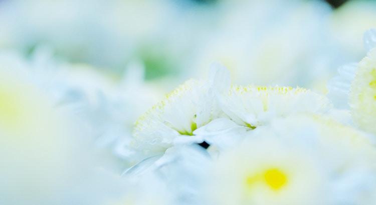 Glücklich sind diejenigen, die Tag für Tag leben, sich sehr wenig beklagen und dankbar sind für die kleinen Dinge im Leben. - Unbekannt