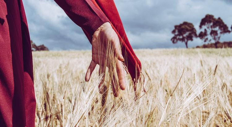 Das Leben leicht tragen und tief genießen ist ja doch die Summe aller Weisheit. - Wilhelm von Humboldt