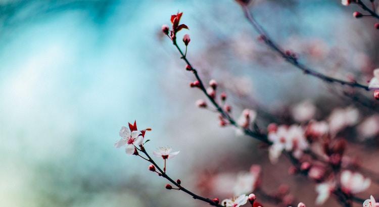 Die Kraft der Gedanken ist unsichtbar wie der Same, aus dem ein riesiger Baum erwächst; sie ist aber der Ursprung für die sichtbaren Veränderungen im Leben des Menschen. - Lew Tolstoi
