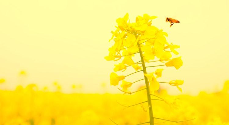 Wenn der, der du sein willst und der, der du bist, übereinstimmen, kann man dir von Herzen gratulieren. Du hast eine große Aufgabe bewältigt und dir die Lizenz zum Fliegen angeeignet. - Esragül Schönast