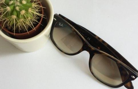 brillekaktus99.jpg