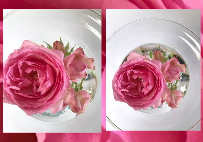 rose-rosa-combi.jpg