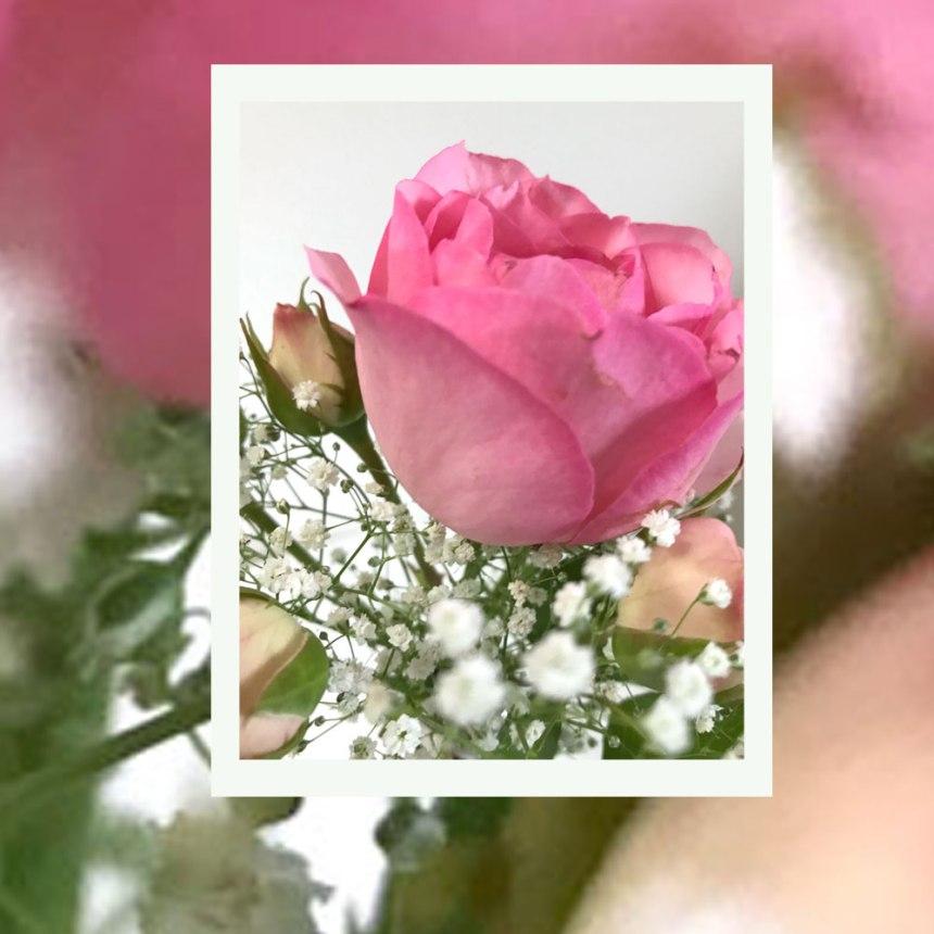 rose-rosa-verschwommen.jpg