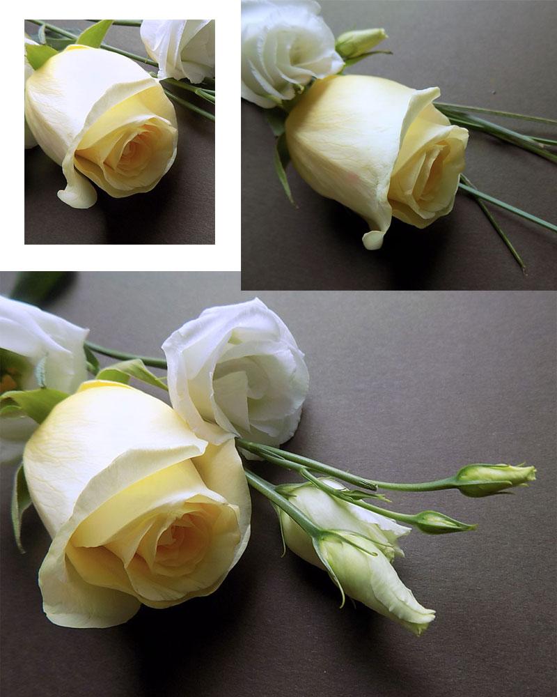 rosen-gelb-coll