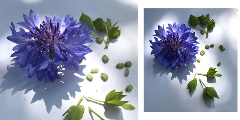 bilder-coll.jpg