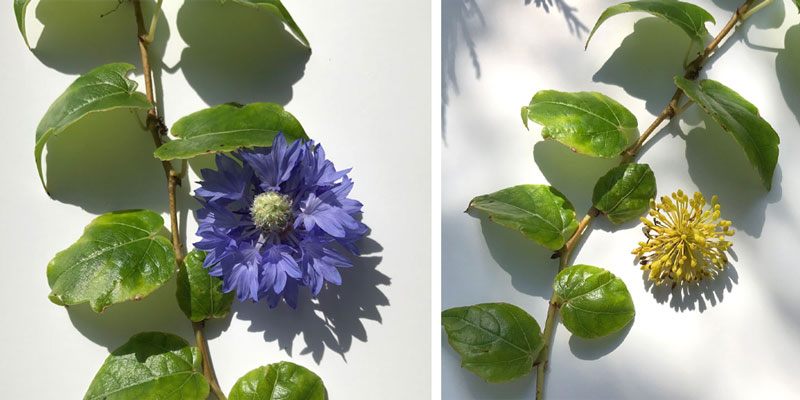 bilder-coll4.jpg