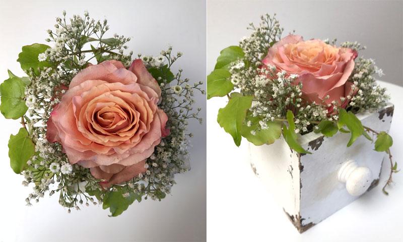 lachs-rose-coll.jpg