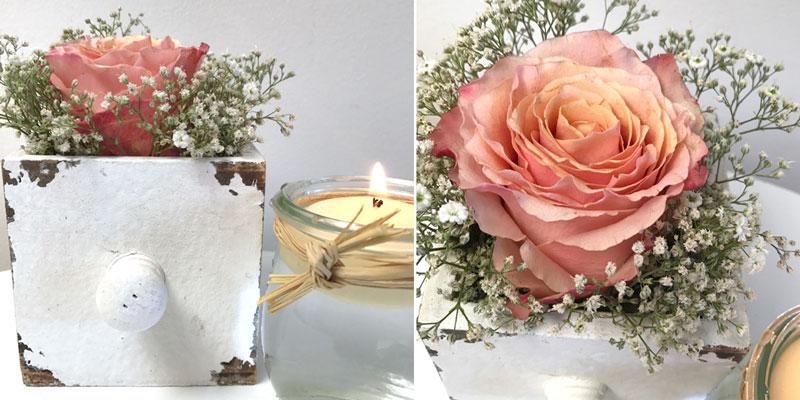 rose-lachs-coll.jpg