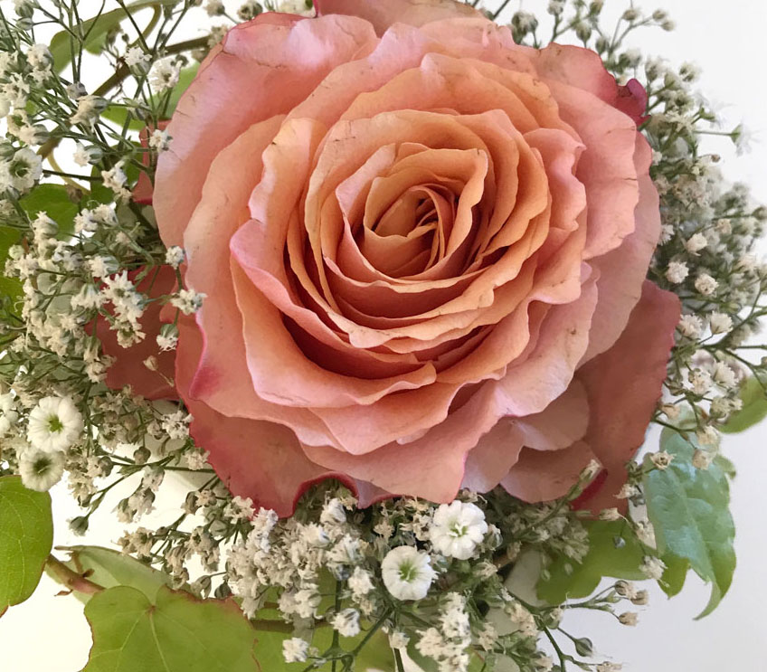 rose-lachs16 Kopie.jpg