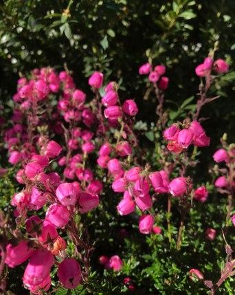 stock-rosa4.jpg