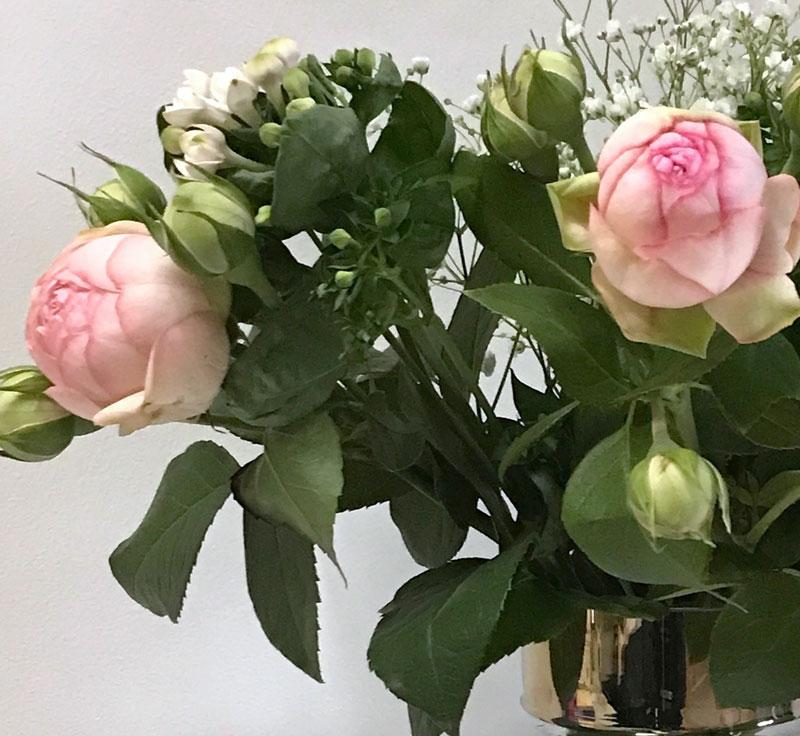 strauss-rosa6.jpg