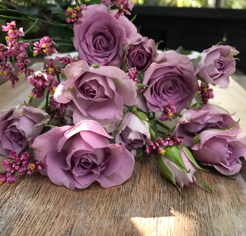 rose-lila10.jpg
