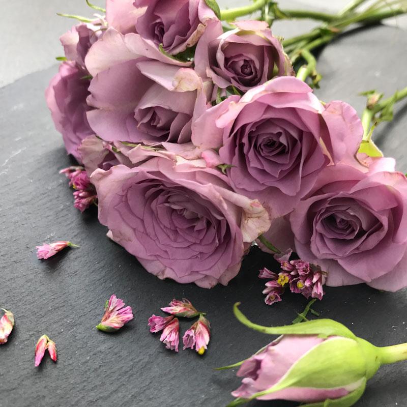 rose-lila6.jpg