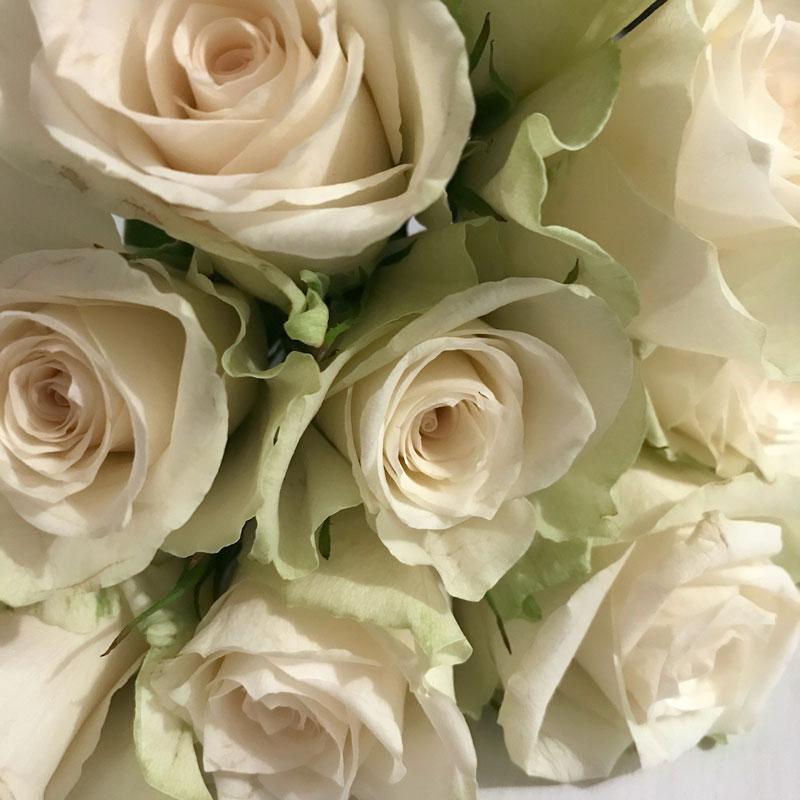 rose-weiss7.jpg