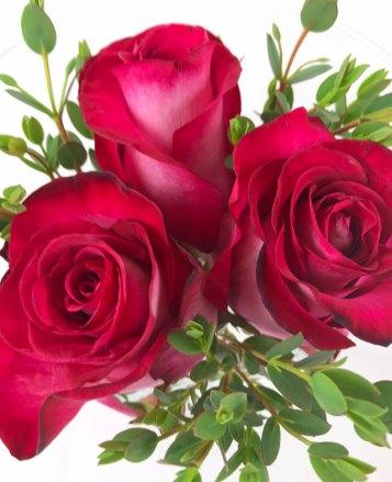 rosen10.jpg