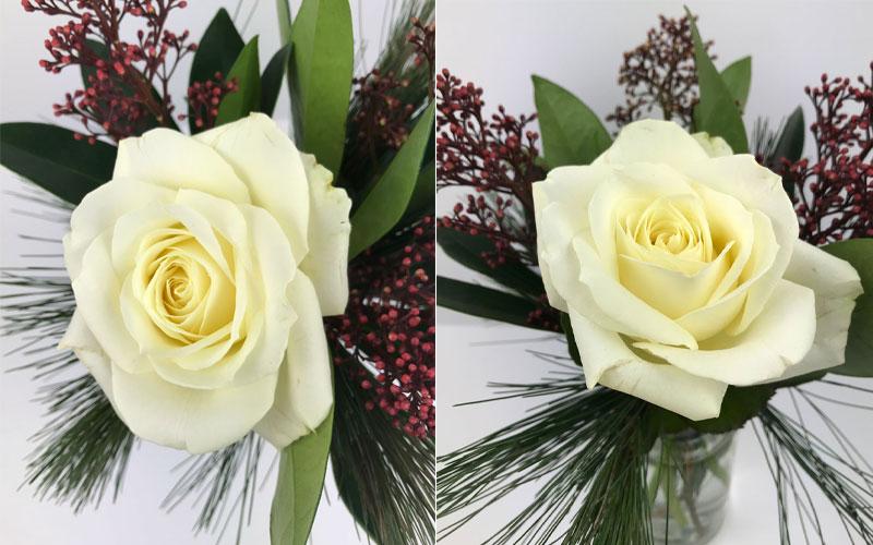 rose-coll.jpg