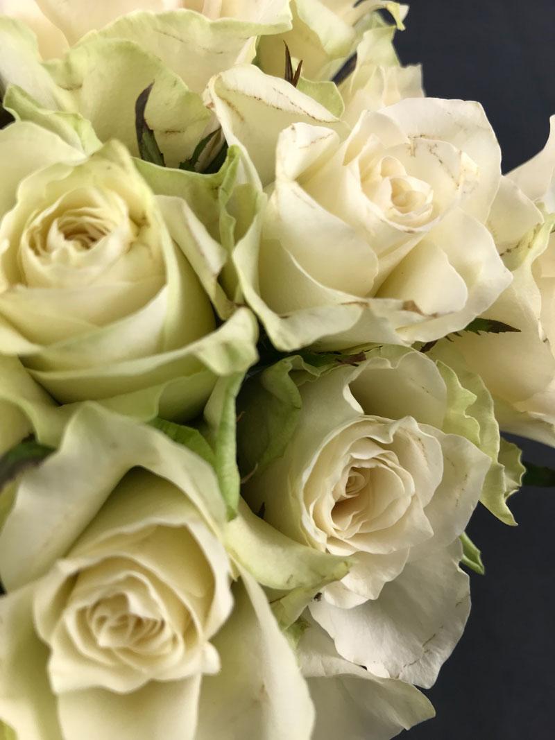 rosen208.jpg