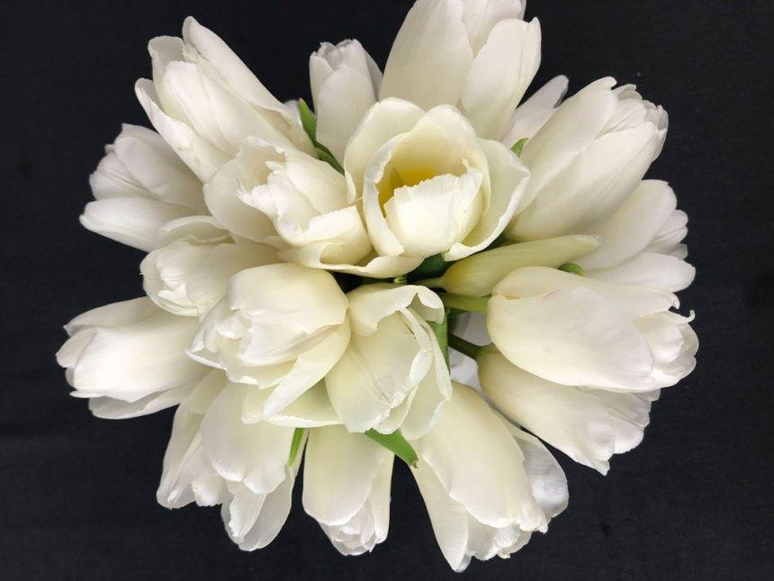 tulpe-wei9600.jpg