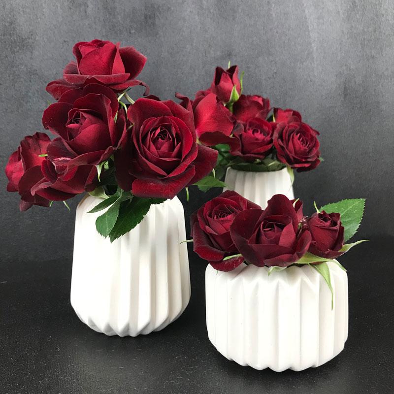 rose-rot30.jpg