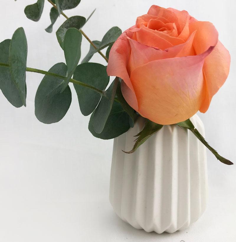 rose60.jpg