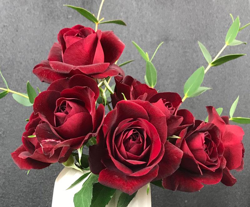 rot-rose17.jpg