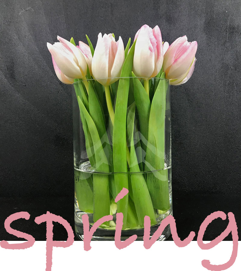 tulp-spring.jpg