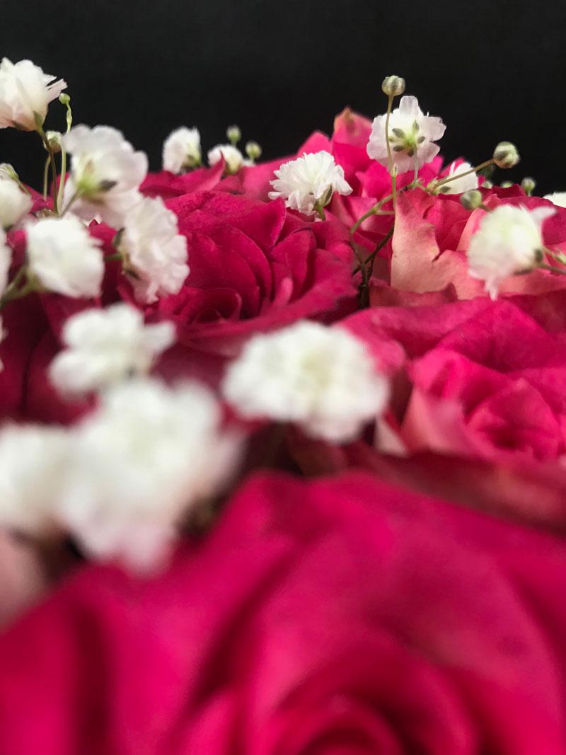 rosen-pink-wow