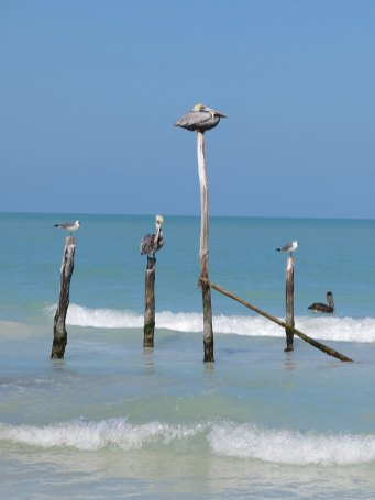 Ein Dicker Vogel... Pelikan, ich weiss