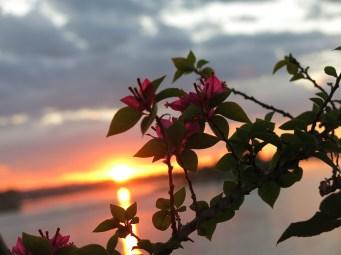 flores_8