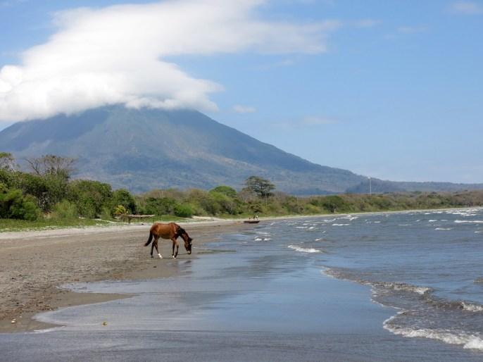 Auf Ometepe gibt es noch einige Wildpferde