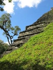 Erde, Gras und Bäume, was im Dschungel nicht gepflegt wird, wird einfach wieder überwuchert.