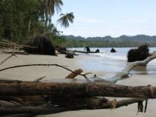 Dschungel direkt am Strand