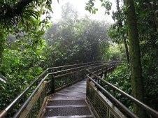 Auf diesen Stegen wird man auf argentinischer Seite durch den ganzen Park gelotst.