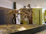 Im Museum des Parks
