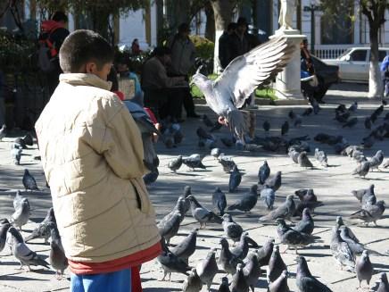 Ein tapferer Taubenfütterer