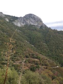 sequoia_01_01