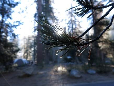 sequoia_01_10