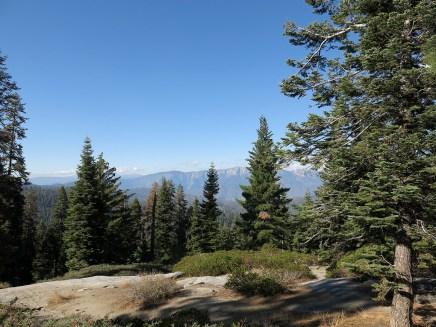 sequoia_02_20