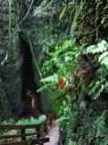 waitomo_cave_01
