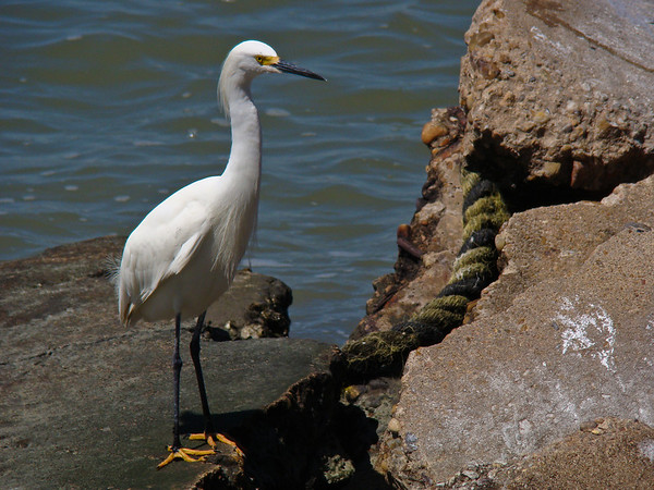 Egret and the Rubble