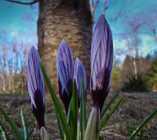 Pioneers of Spring