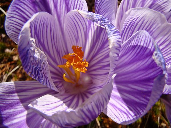 Such a joyful flower...