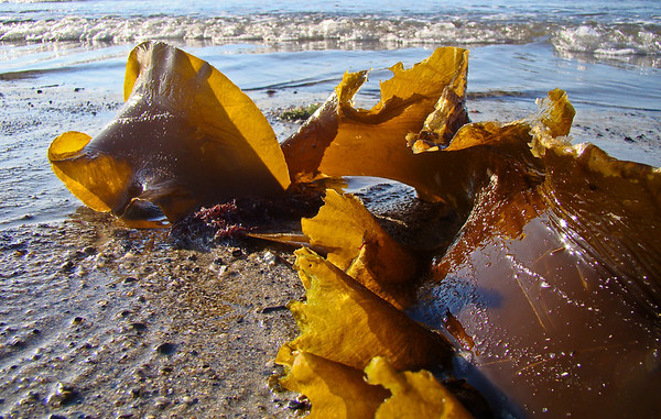 Sculpture of Seaweed and Light