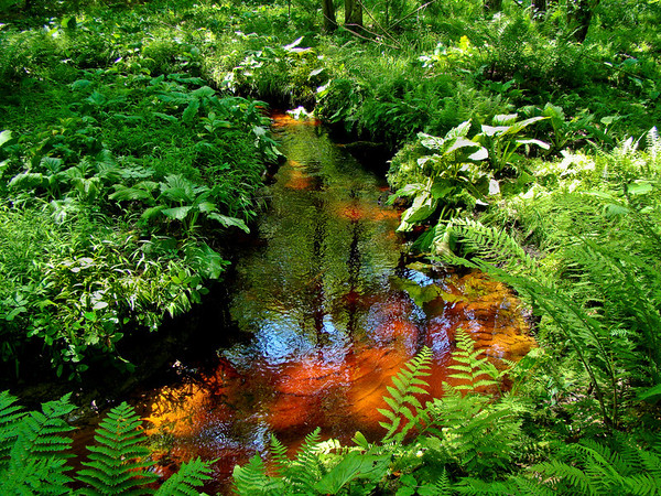 Stained Glass Water: Fernald Brook, Kennebunk ME