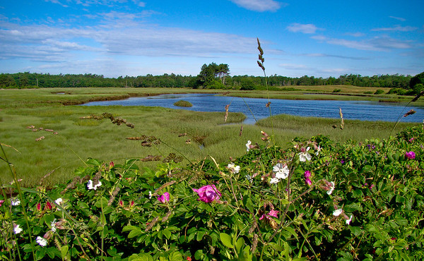 High-tide in the Tidal marsh, With flowers.