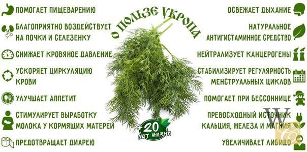 polza-ykropa-1