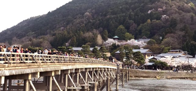 Arashiyama with Cherry blossoms is the best season now.
