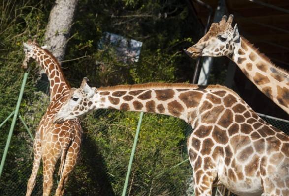 Достопримечательности Любляны  Зоопарк Любляны Словения